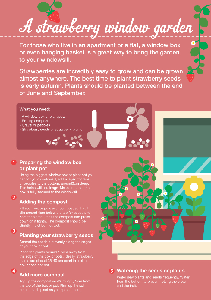 Strawberry window gardens for kids