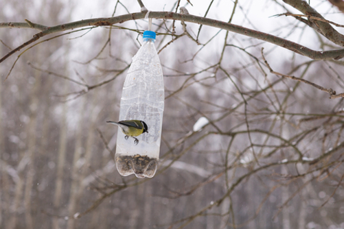 How to make a bottle bird feeder