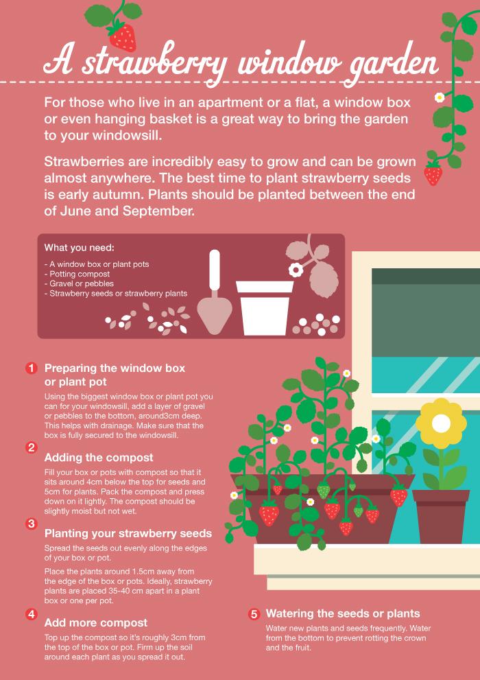 Strawberry window gardens for kids