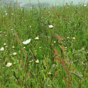 Today is National Meadows Day, but why are wildflower meadows important?